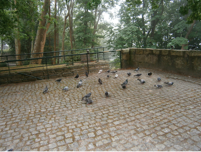 Uma imagem do Porto Romântico, zona do Palácio de Cristal.