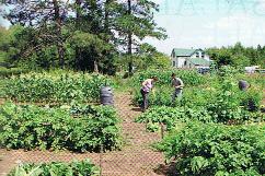 Horta-jardim de uma família que vive fora da rede elétrica e se autoabastece em grande parte, quer na alimentação quer na energia. In The Mother Earth News, N.º 266, pág. 29
