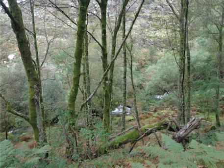 Árvores autóctones no Gerês. A árvore, sobretudo quando autóctone, foi e é ainda uma das principais preocupações da Campo Aberto