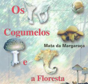 Margaraça-cogumelos