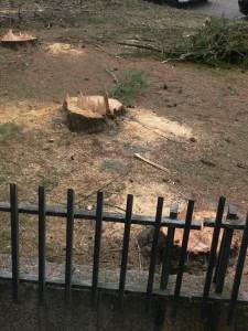 abate árvores guimarães