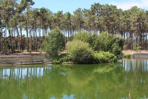Um aspeto do Parque do Buçaquinho, perto de Cortegaça, no concelho de Ovar.
