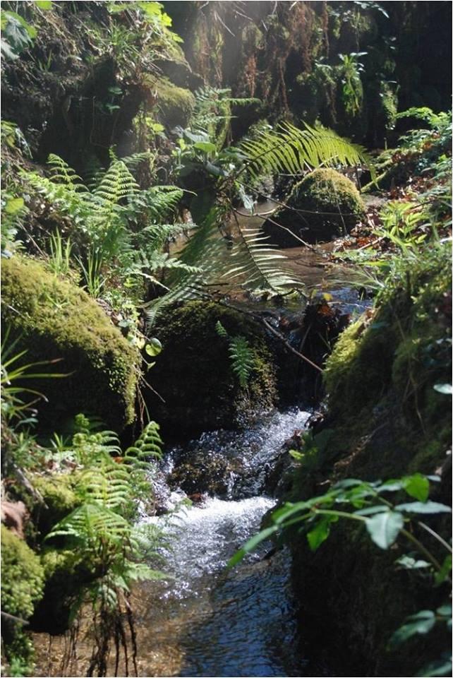 Uma pequena cascata que faz o encanto do local.